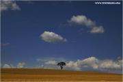 m3_824135_baum_fb.jpg