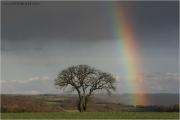 c21_717896_regenbogen_fb.jpg