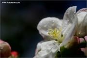 m3_137236_apfel_fb.jpg