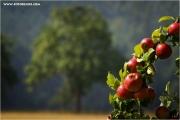 m3_827164_apfel_fb.jpg