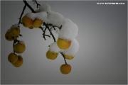 m3_840740_apfel_fb.jpg