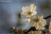 m3_919670_kirsche_fb.jpg