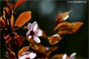m3_920208_pflaume_fb.jpg