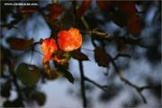 m3_112138_herbst_fb.jpg