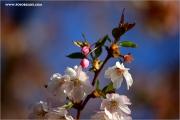 m3_114664_bluete_fb.jpg