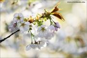 m3_114694_bluete_fb.jpg