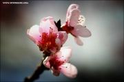 m3_120147_pfirsich_fb.jpg