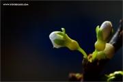 m3_128829_kirsche_fb.jpg