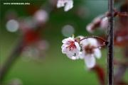 m3_136895_regen_fb.jpg
