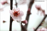 m3_136897_regen_fb.jpg