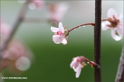 m3_136902_regen_fb.jpg