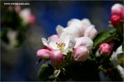 m3_137894_bluete_fb.jpg