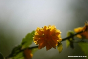 m3_820068_busch_fb.jpg