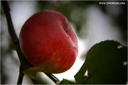 m3_828195_apfel_fb.jpg