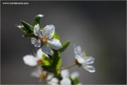m3_920129_bluete_fb.jpg