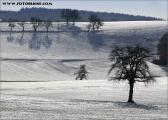 c20_560955_winter_fb