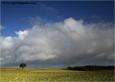 c20_632020_baum_fb.jpg