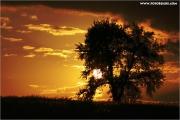 c21_727213_baum_fb.jpg