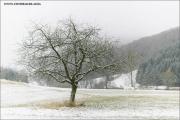 c21_749336_winter_fb