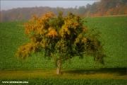 m3_082926_apfelbaum_fb.jpg