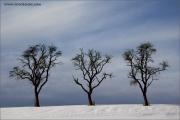 m3_104770_winter_fb.jpg