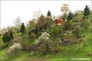 m3_817488_kirschen_fb.jpg