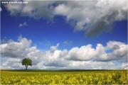 m3_818900_baum_fb.jpg