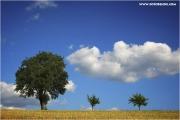 m3_824152_baum_fb.jpg