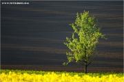 m3_920766_baum_fb.jpg