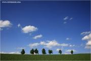 m3_924718_baumreihe_fb.jpg