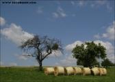 c20_527275_rollen_fb.jpg