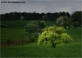 c20_639734_baum_fb.jpg
