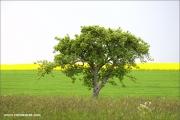 m3_109644_baum_fb.jpg