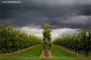 m3_111185_apfelplantage_fb.jpg