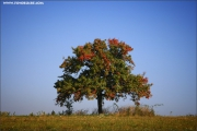 m3_112144_baum_fb.jpg