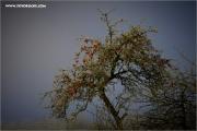m3_121156_apfelbaum_fb.jpg
