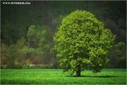 m3_818410_baum_fb.jpg