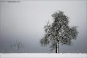 m3_840852_schneebaum_fb.jpg