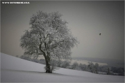m3_840862_winterbaum_fb.jpg