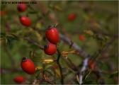 c07151_herbst_fc.jpg