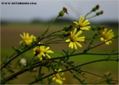 c07187_herbst_fc.jpg