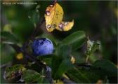 c07212_herbst_fc.jpg