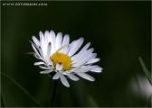 c20_516159_blume.jpg