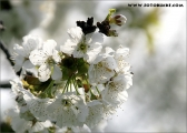 c20_516489_kirsche.jpg