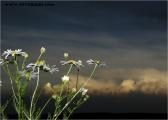 c20_528850_blume_fb.jpg