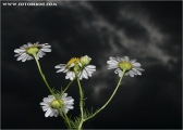 c20_529549_bluem_fc
