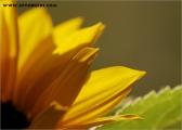 c20_548760_blume_fb.jpg