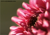 c20_548795_blume_fb.jpg