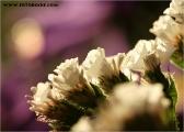 c20_548811_blume_fb.jpg