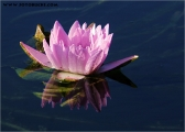 c20_551054_seerose_fb.jpg